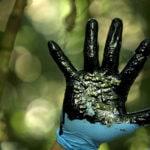 Un verde mortal: Un nuevo informe desvela la magnitud de las amenazas que reciben los defensores y defensoras ambientales