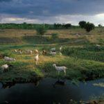 البرازيل: الحق في المعلومات + المياه